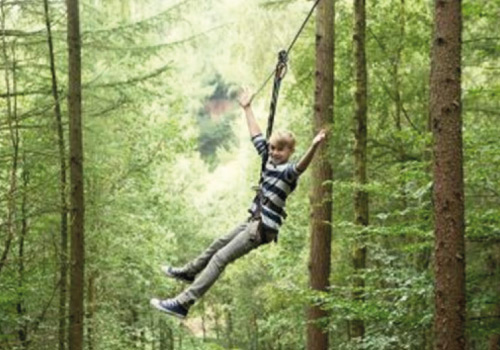 Attraction image for Go Ape Haldon Forest