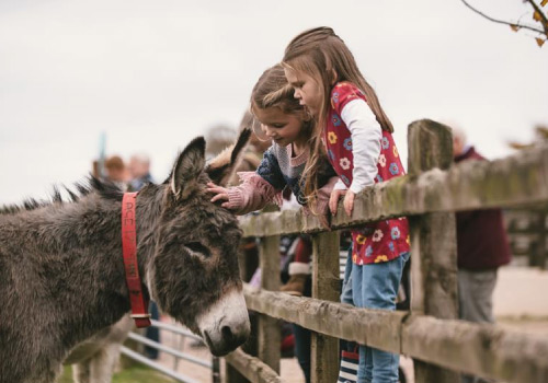 Attraction image for The Donkey Sanctuary