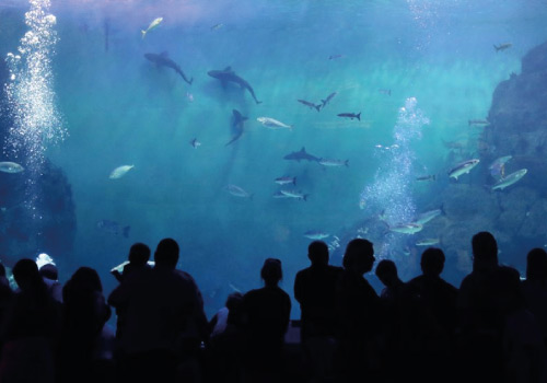 Attraction image for National Marine Aquarium
