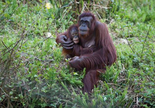 Attraction image for Paignton Zoo