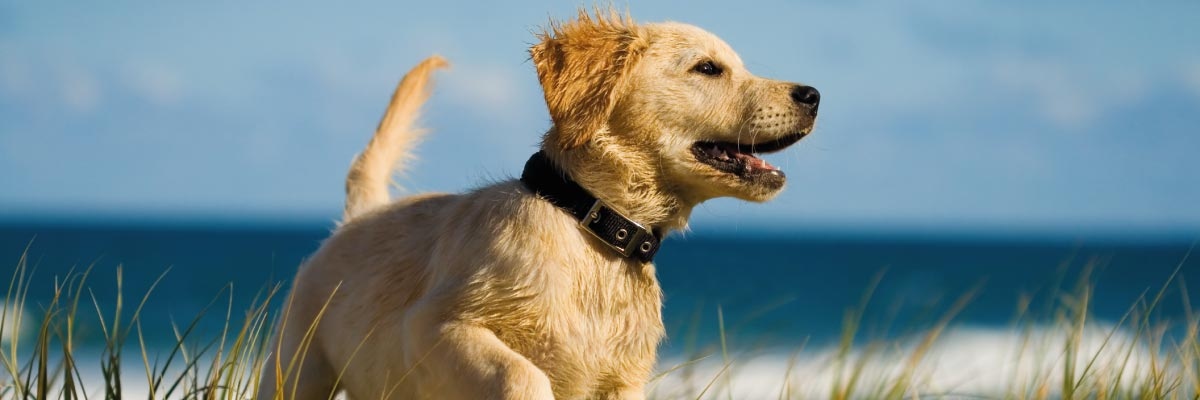 Dog-friendly holidays - dog on the beach